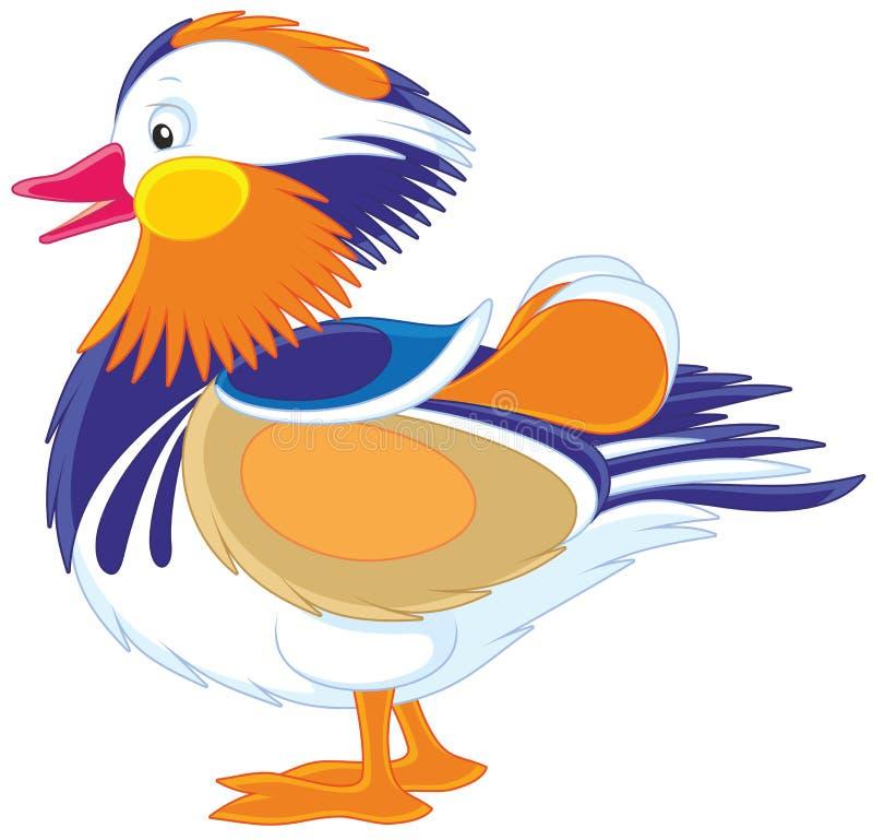 Bunte Mandarinen-Ente lizenzfreie abbildung