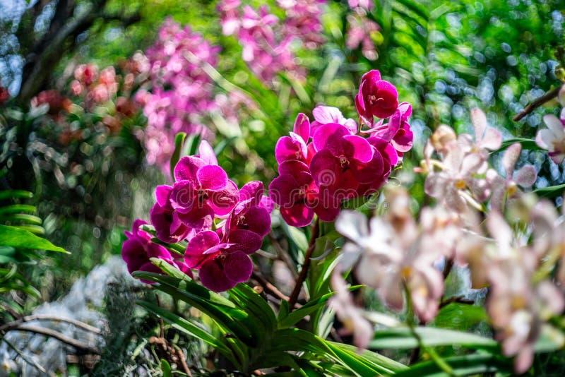 Bunte Orchidee mit grünem Unschärfehintergrund stockbilder