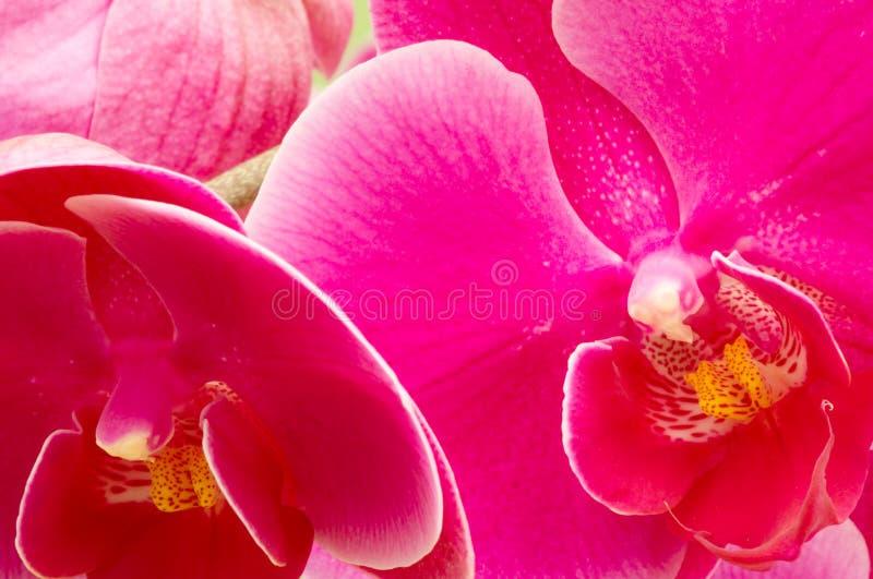 Bunte Orchideen stockfotografie