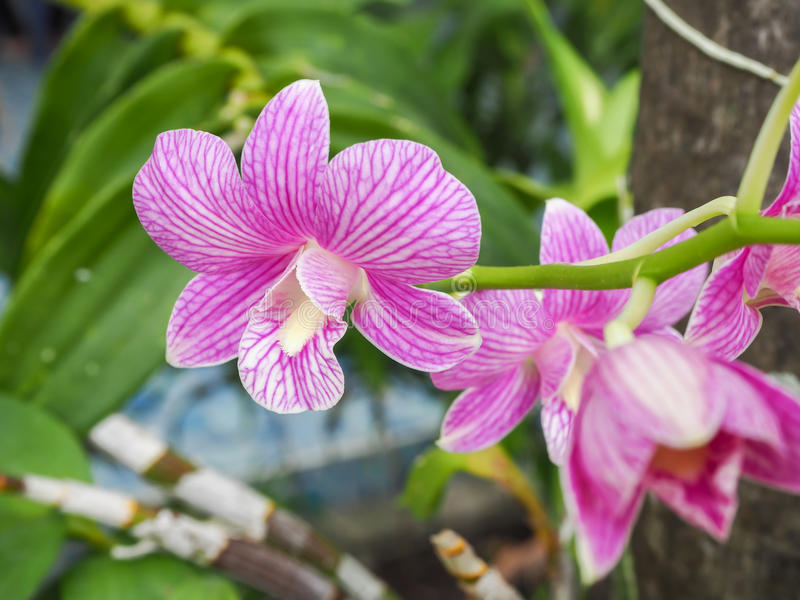 Bunte Orchideen lizenzfreies stockbild