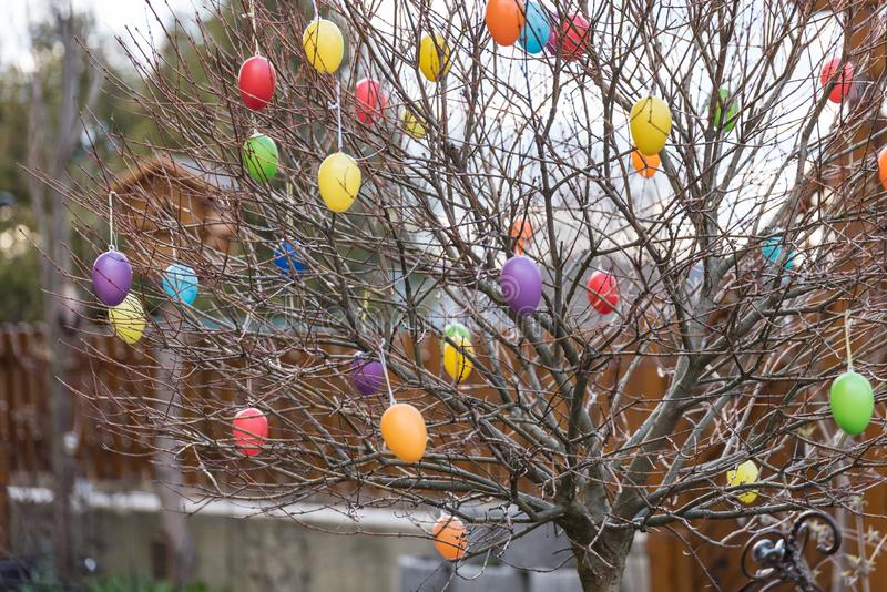 Bunte Ostereier auf einem Baum stockfotografie
