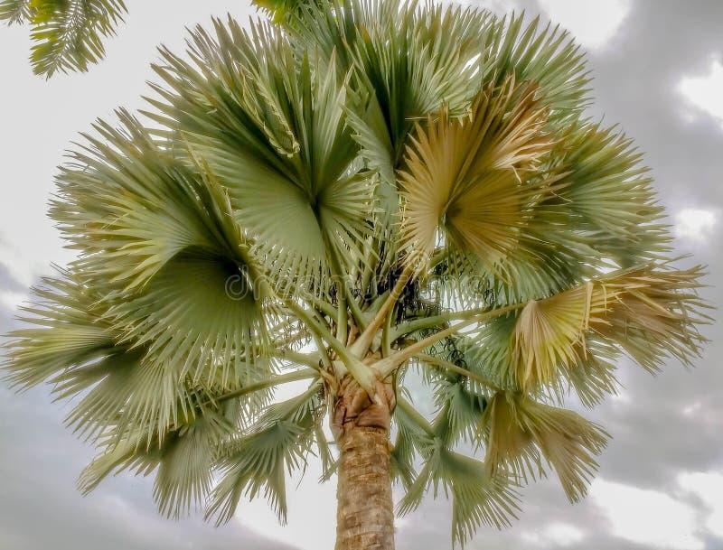 Bunte Palme mit einem bewölkten Himmel lizenzfreies stockbild