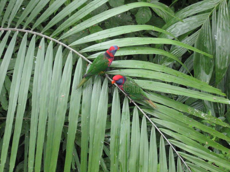 Bunte Papageien in Edward Youde Aviary, Hong Kong-Park lizenzfreie stockfotos