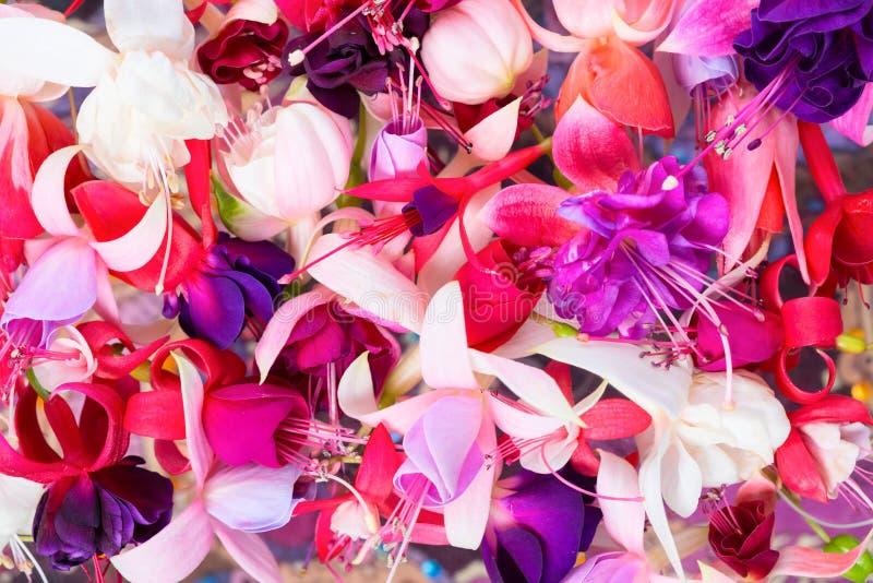 Bunte pinkfarbene Blumen mögen Hintergrund, Karte für Sommer oder spr lizenzfreies stockfoto