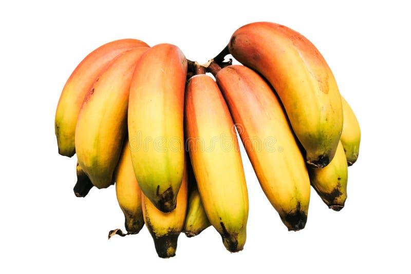 Bunte reife Bananen lokalisiert auf Weiß stockfotos