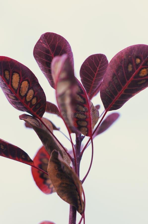 Bunte Rotblätter auf weißem Hintergrund lizenzfreies stockbild