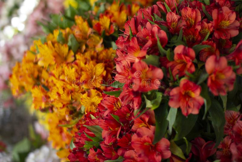 Bunte rote und orange Blumenanordnung stockbild