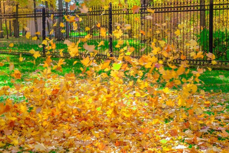 Bunte schöne Blätter von den Bäumen fallen und spinnen in die Luft in einem Herbstpark lizenzfreie stockfotografie