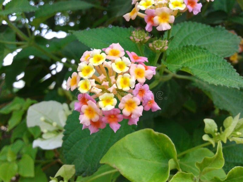 Bunte schöne Blumen lizenzfreies stockbild