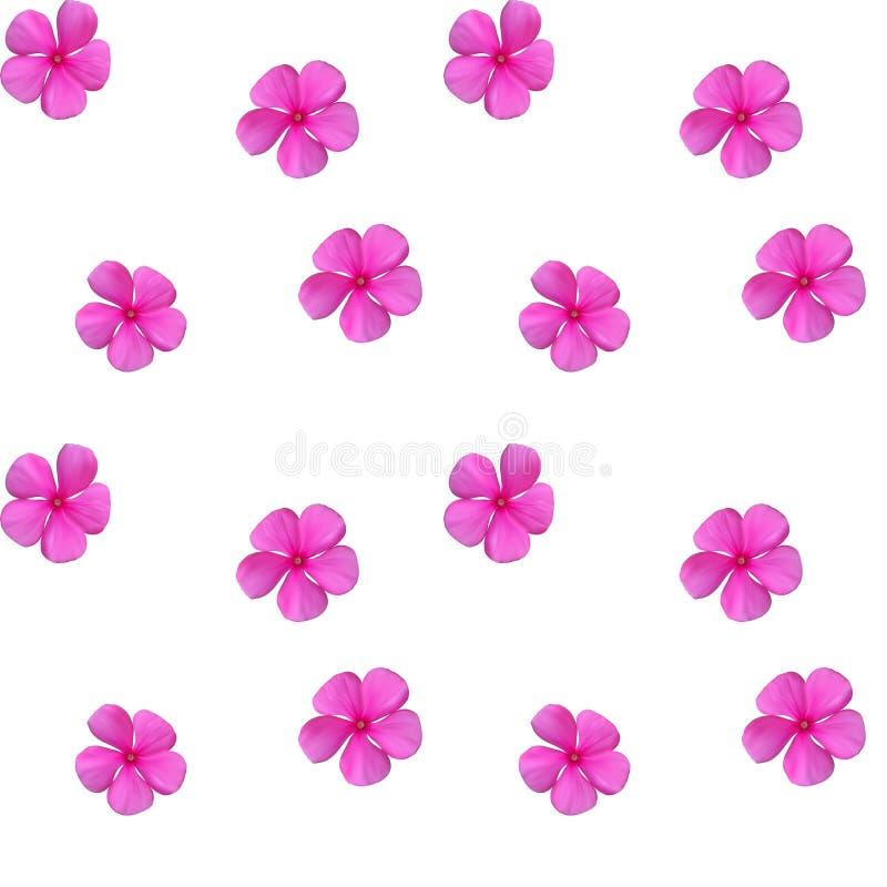 Bunte schöne naturalistische rosa Blume Nahtloses Muster V lizenzfreie abbildung