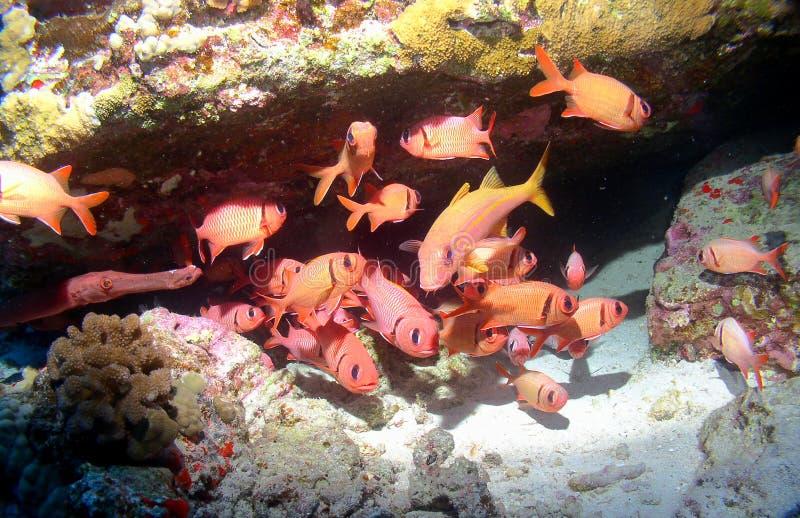 Bunte Schule der Fische auf einem Maui-Riff stockfotografie