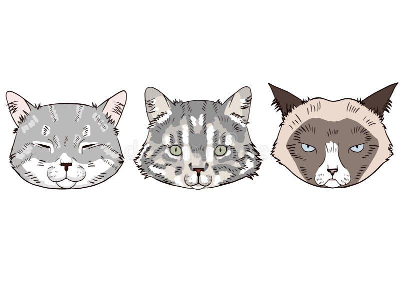 Bunte Skizzen von Katzenköpfen Katzenporträts auf weißem Hintergrund lizenzfreie abbildung