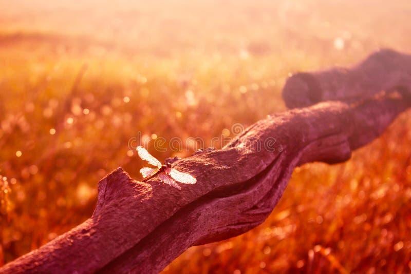 Bunte Sommerszene mit schöner Libelle auf hölzernem Stock bei Sonnenuntergang Blaues Meer, Himmel u getont lizenzfreie stockbilder