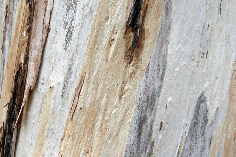 Bunte strukturierte Baumrinde stockfotografie