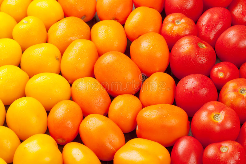 Bunte Tomaten Gelb, Orange und Rot stockfotografie