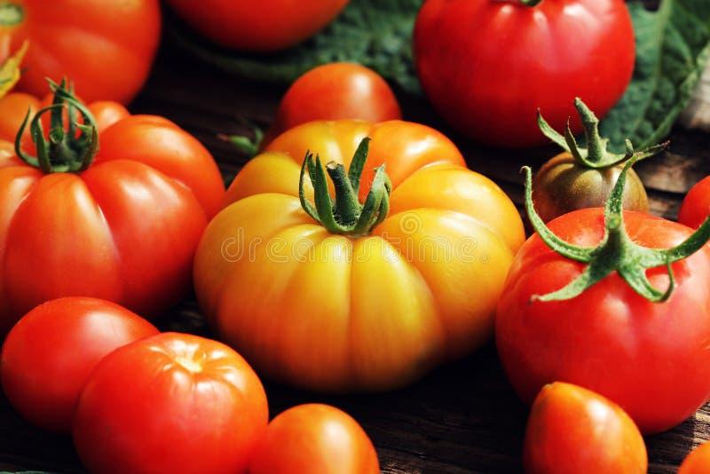Bunte Tomaten - rot, gelb, orange Kochende Gemüsekonzeption der Ernte lizenzfreie stockbilder