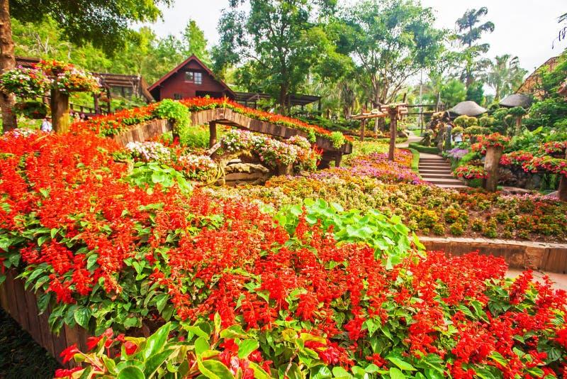 Bunte tropische Blumen sind in der Blüte im botanischen Garten lizenzfreie stockfotografie