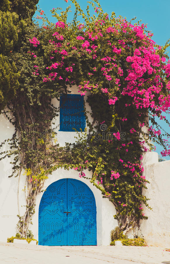 Bunte tropische purpurrote Bouganvillakriechpflanze, die über blauer Tür auf einem rehabilitierten Landhaus blüht lizenzfreies stockfoto