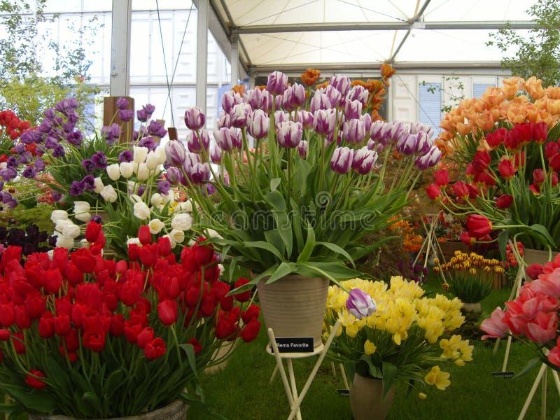 Bunte Tulip Flower Display stockfotos