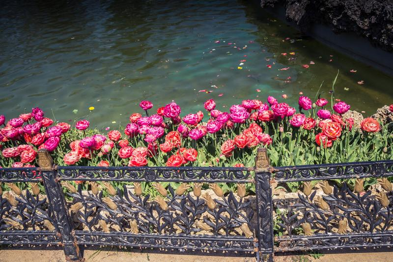 Bunte Tulpe blüht bloomby den Teich lizenzfreie stockbilder