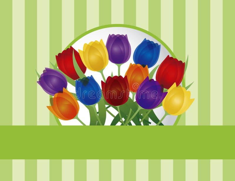 Bunte Tulpe-Gruß-Karten-Abbildung lizenzfreie abbildung