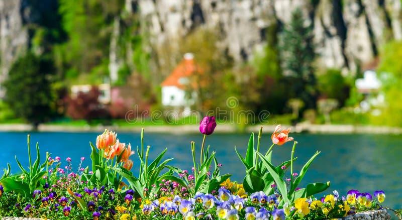 Bunte Tulpen auf blured Hintergrund, Flussufer, Namur, Messe stockbild