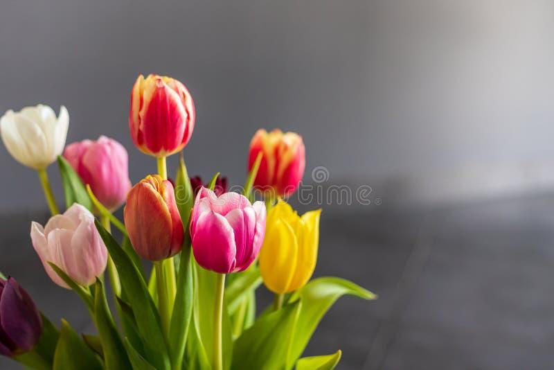 Bunte Tulpenblumen als Grußkarte Mothersday oder Fr?hlingskonzept lizenzfreie stockfotografie