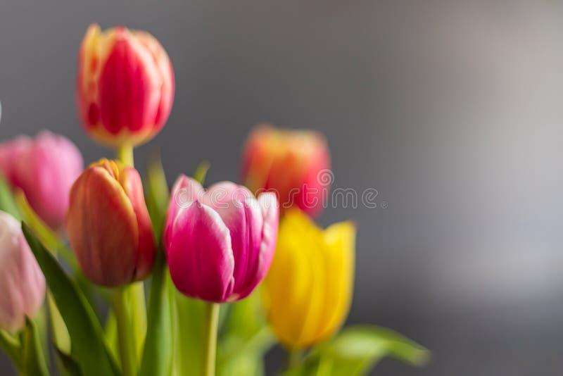 Bunte Tulpenblumen als Grußkarte Mothersday oder Fr?hlingskonzept lizenzfreies stockfoto