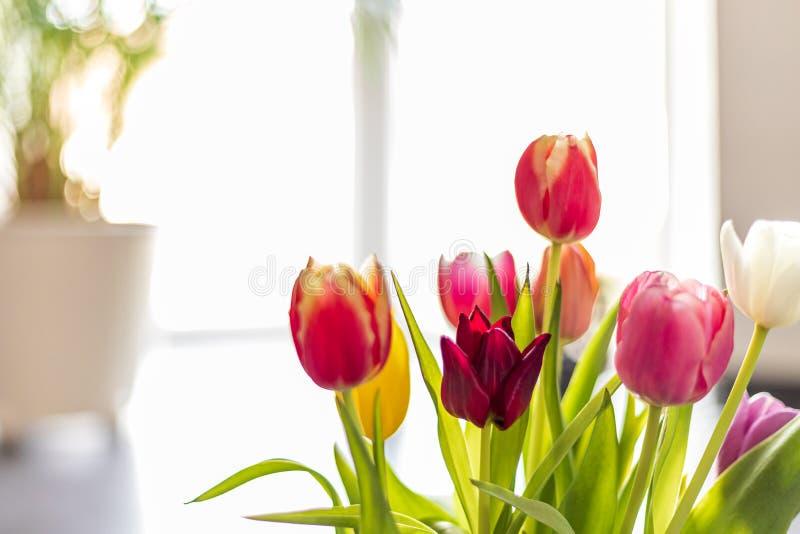 Bunte Tulpenblumen als Grußkarte Mothersday oder Fr?hlingskonzept stockfotos