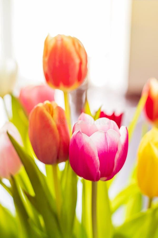 Bunte Tulpenblumen als Grußkarte Mothersday oder Fr?hlingskonzept lizenzfreie stockfotos