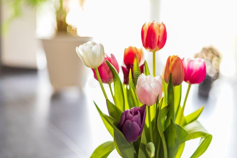 Bunte Tulpenblumen als Grußkarte Mutter-Tag oder Frühlingskonzept stockbild