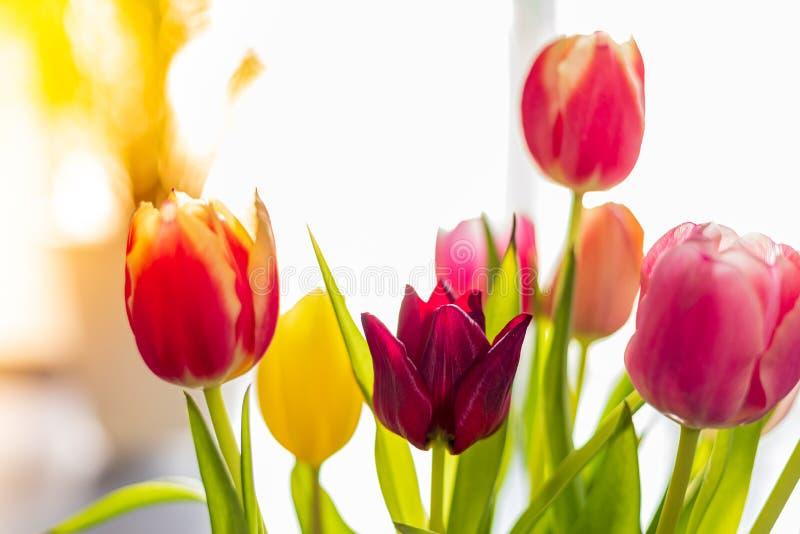 Bunte Tulpenblumen als Grußkarte Mutter-Tag oder Frühlingskonzept lizenzfreie stockbilder