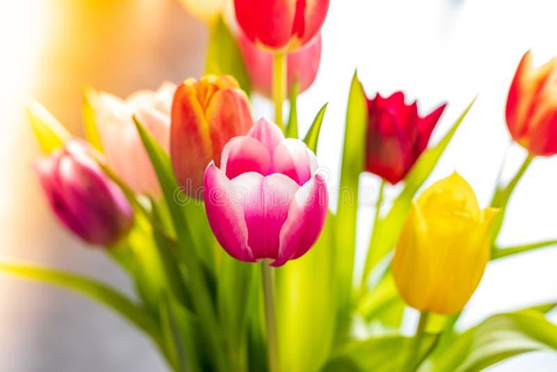 Bunte Tulpenblumen als Grußkarte Mutter-Tag oder Frühlingskonzept stockbilder