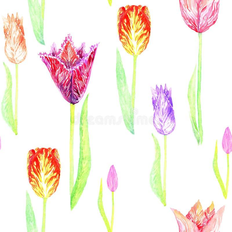 Bunte Vielzahl der Tulpe mit Blättern stock abbildung