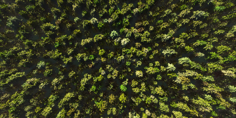 Bunte Vogelperspektivekamera bewegt sich vom grünen Wald von dichten Mischwipfeln, hochauflösender 3D CG Wiedergabekranke der Pan vektor abbildung