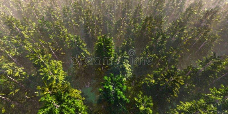 Bunte Vogelperspektivekamera bewegt sich vom gr?nen Wald von dichten Mischwipfeln, hochaufl?sender 3D CG Wiedergabekranke der Pan lizenzfreie abbildung