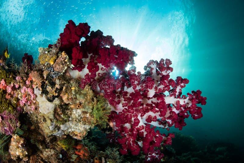 Bunte weiche Korallen und Sonnenlicht lizenzfreie stockbilder