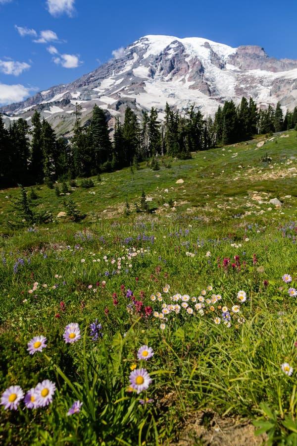 Bunte wilde Blumen in den Alpenwiesen unter dem Mount Rainier lizenzfreie stockfotos
