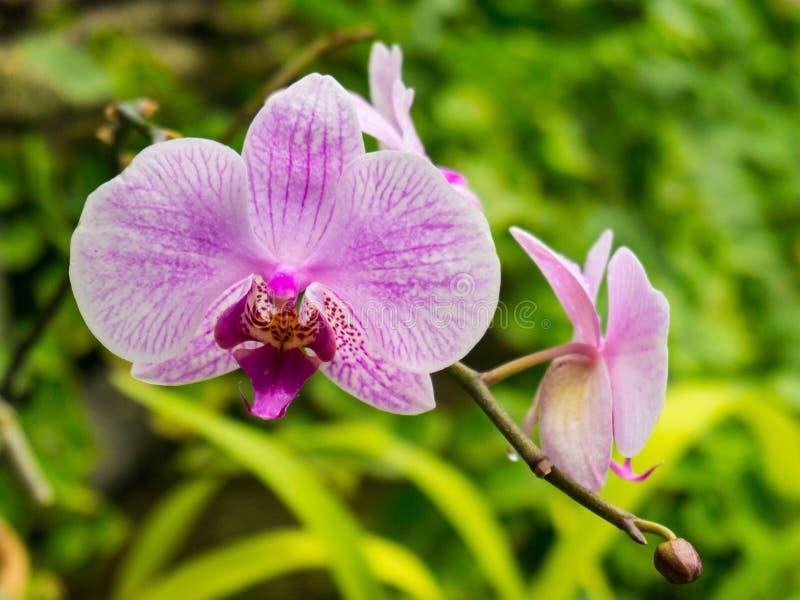 Bunte wilde Orchideen auf der Niederlassung im tropischen Regenwald stockfoto