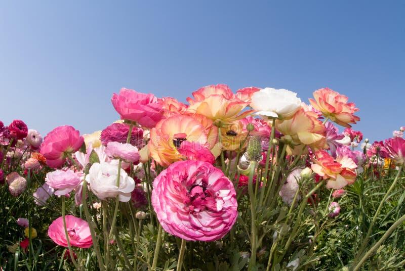 Bunte Wildflowers lizenzfreie stockfotos