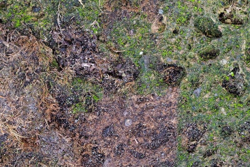 Bunter abstrakter Hintergrund des moosigen vulkanischen Tufffelsens stockfoto