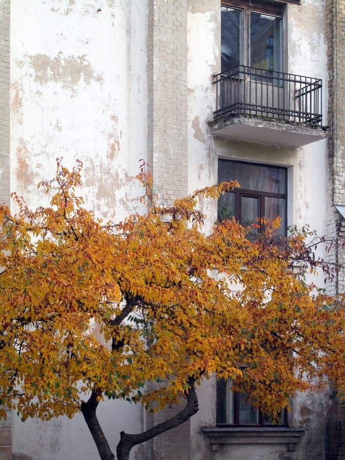Bunter Autumn Leaves Against ein städtisches Gebäude lizenzfreie stockfotos