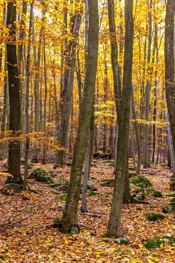 Bunter Autumn In Voderady Beechwood, Czechia lizenzfreie stockfotos