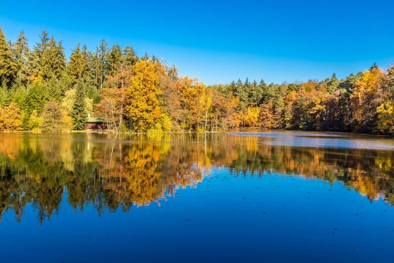 Bunter Autumn In Voderady Beechwood, Czechia stockfoto