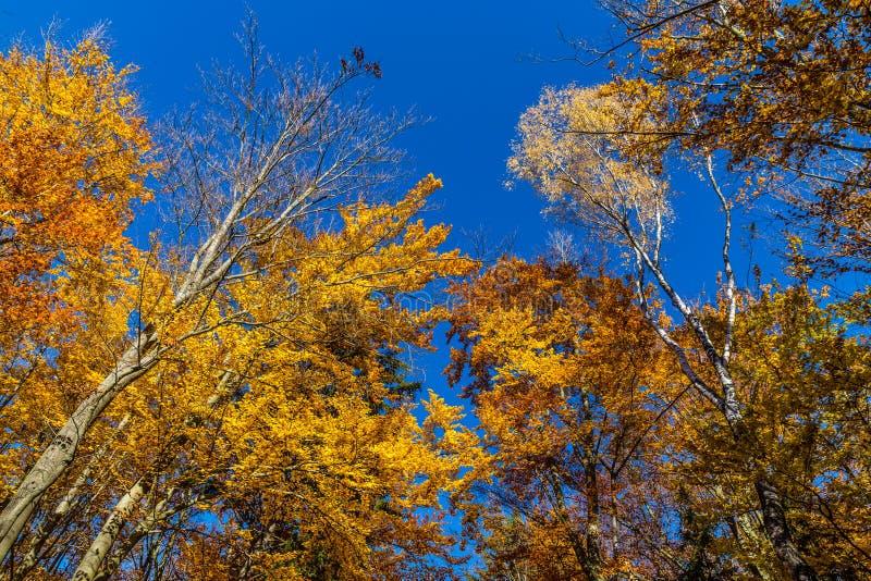 Bunter Autumn In Voderady Beechwood, Czechia stockbild