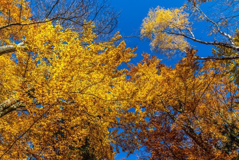 Bunter Autumn In Voderady Beechwood, Czechia lizenzfreie stockfotografie