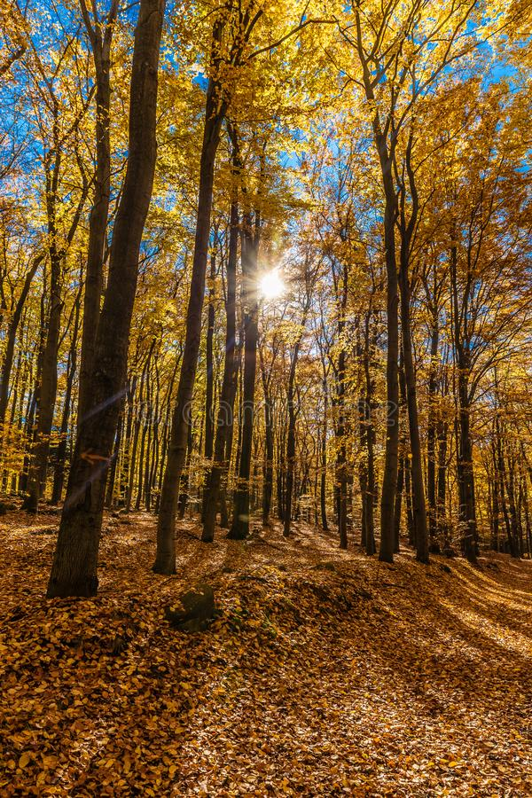 Bunter Autumn In Voderady Beechwood, Czechia lizenzfreie stockbilder