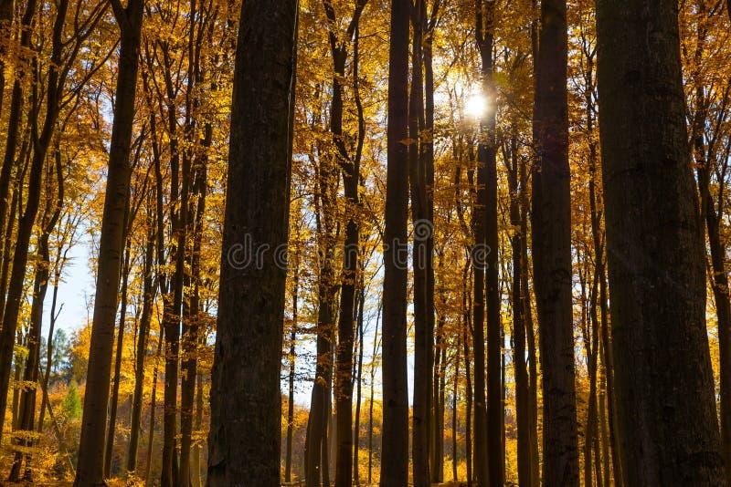 Bunter Autumn In Voderady Beechwood, Czechia lizenzfreies stockfoto