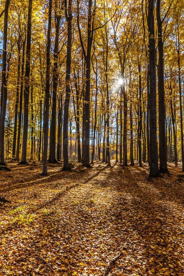 Bunter Autumn In Voderady Beechwood, Czechia lizenzfreies stockbild