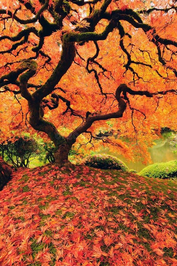 Bunter Baum im Herbst stockfoto